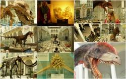 Zajęcia w Muzeum Geologicznym